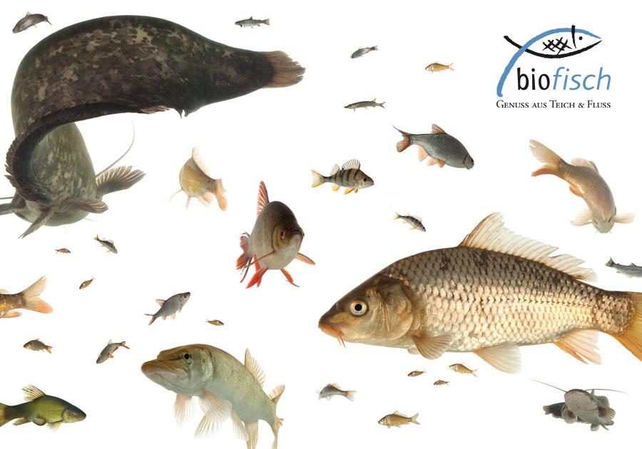 biofisch